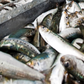 Fish-processing industry in Western Africa